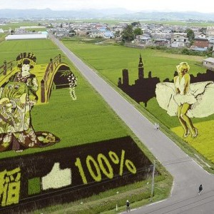 honlapkészítés és webáruház készítés keresőoptimalizálással | Marilyn Monroe vs Napóleon avagy rizscsata Japán módra.