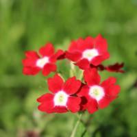honlapkészítés és webáruház készítés keresőoptimalizálással | Virágok testközelből