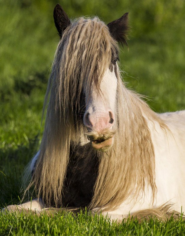 honlapkészítés és webáruház készítés keresőoptimalizálással | Bajszos lovak, avagy lóbajusz vicces módon